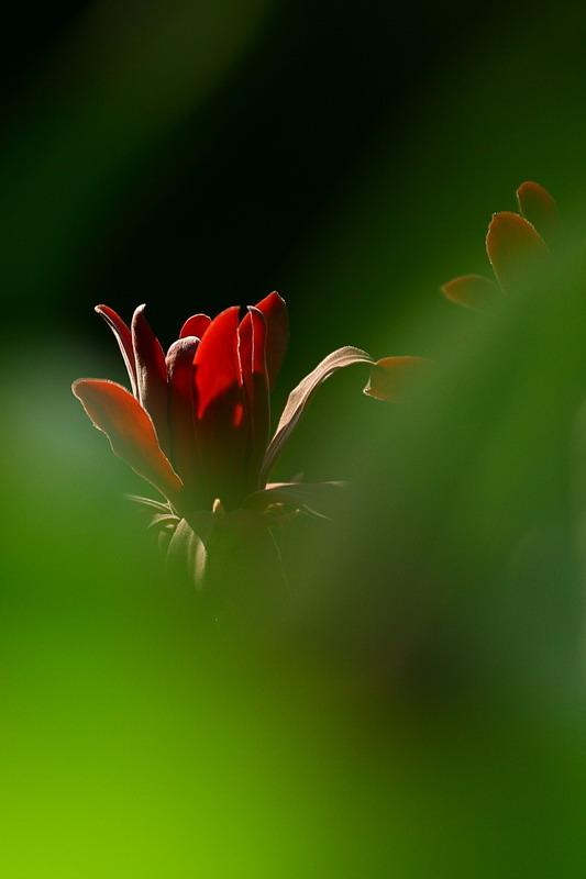 fotosokvilaga-hu45386